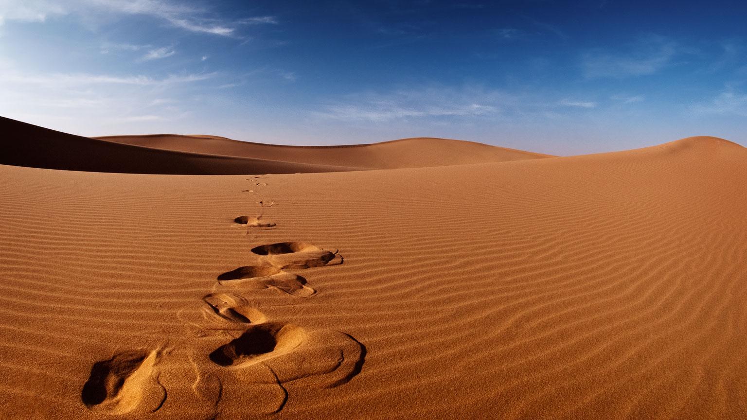 Desert Tracks