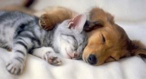 Napping Cuties